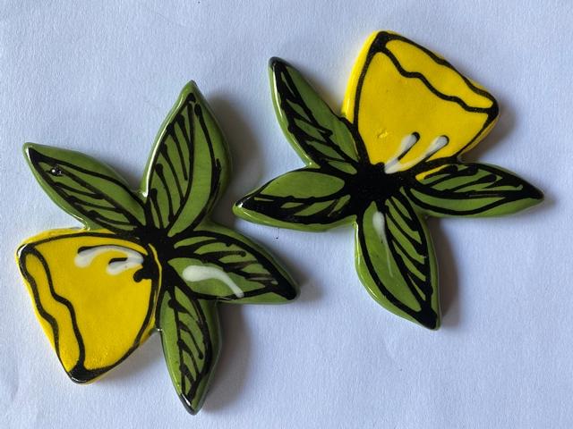 daffodil--165d